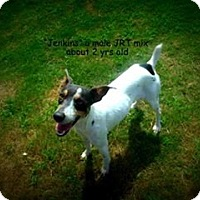 Adopt A Pet :: Jenkins - Gadsden, AL