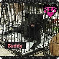Adopt A Pet :: Buddy - Fowler, CA