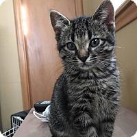 Adopt A Pet :: Skylar - Plymouth, MN