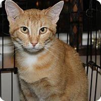 Adopt A Pet :: Shania - Flora, IL