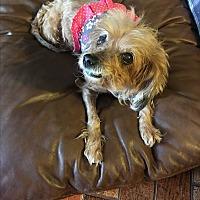 Adopt A Pet :: Scarlett - Lehigh, FL
