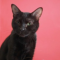Adopt A Pet :: Catelyn - Redwood City, CA