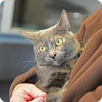 Adopt A Pet :: Cheryl - Gardnerville, NV