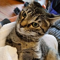 Adopt A Pet :: Noel - Medford, NJ