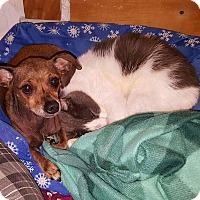 Adopt A Pet :: Hope - Carthage, NC