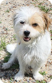 Terrier (Unknown Type, Small) Mix Dog for adoption in Forked River, New Jersey - Kika