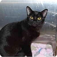 Adopt A Pet :: Tori - Modesto, CA
