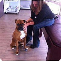 Adopt A Pet :: Guinness - Lake Forest, CA