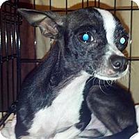 Adopt A Pet :: Feliz - Ogden, UT