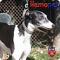 Adopt A Pet :: Ultra - Orange County, CA