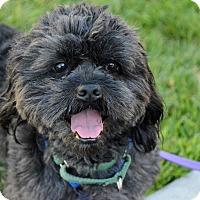Adopt A Pet :: Champ - Mission Viejo, CA