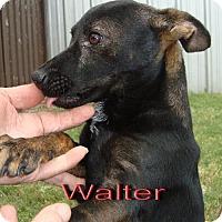 Adopt A Pet :: Walter - Coleman, TX