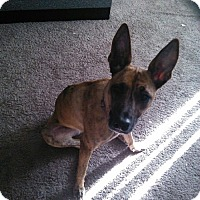 Adopt A Pet :: Xena - Hollywood, FL