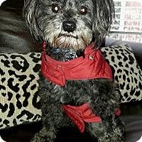 Adopt A Pet :: Labella - Marietta, GA