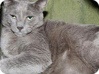 Domestic Shorthair Cat for adoption in Long Beach, Washington - Mojo