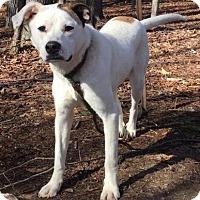 Adopt A Pet :: Molly ($400) - Brattleboro, VT