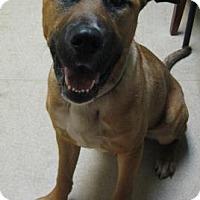 Adopt A Pet :: John - Gary, IN