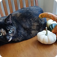 Adopt A Pet :: Gretl - St. Louis, MO