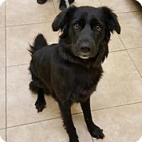 Adopt A Pet :: Roxee - Reisterstown, MD