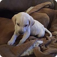 Adopt A Pet :: Eddie - Keyport, NJ