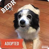 Adopt A Pet :: Bella - Regina, SK
