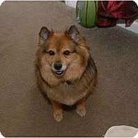 Adopt A Pet :: Molly - Murfreesboro, TN