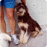 Adopt A Pet :: Sinbad - Albuquerque, NM