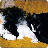 Adopt A Pet :: Mocha & Sami - Quincy, MA