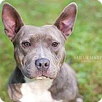 Adopt A Pet :: Gemma - Reisterstown, MD