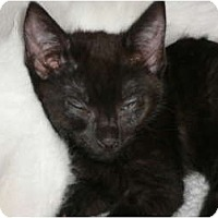 Adopt A Pet :: Charlie - lake elsinore, CA
