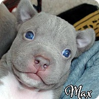 Adopt A Pet :: Max - Cary, IL