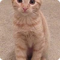 Adopt A Pet :: Tamysen - North Highlands, CA