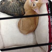 Adopt A Pet :: Sherman - Simpsonville, SC