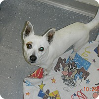 Adopt A Pet :: MICRO - Sandusky, OH