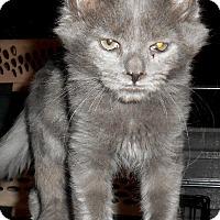 Adopt A Pet :: Payton - Chattanooga, TN