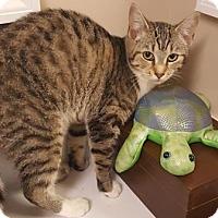 Adopt A Pet :: Elsie - Americus, GA