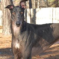 Adopt A Pet :: Ponda's Outcast - Cherry Hill, NJ