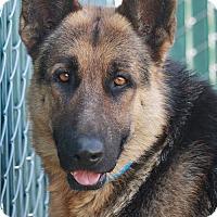 Adopt A Pet :: Gustav von Gusten - Los Angeles, CA