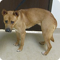 Adopt A Pet :: Jazz - Gary, IN