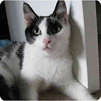 Adopt A Pet :: Morgan - Jenkintown, PA