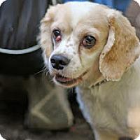 Adopt A Pet :: Jack - Tinton Falls, NJ