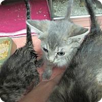 Adopt A Pet :: Leigh - Athens, GA