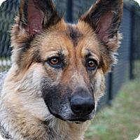 Adopt A Pet :: Halle - Ormond Beach, FL