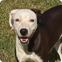 Adopt A Pet :: Sweetly - Lufkin, TX