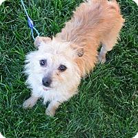 Adopt A Pet :: Amelia - Meridian, ID