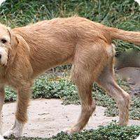 Adopt A Pet :: Yardley - Norwalk, CT