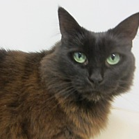 Adopt A Pet :: Jolene - Kingston, WA