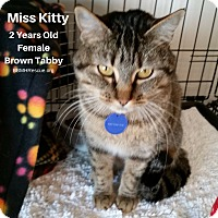 Adopt A Pet :: Miss Kitty - Temecula, CA