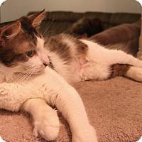 Adopt A Pet :: Peaches - Grand Prairie, TX