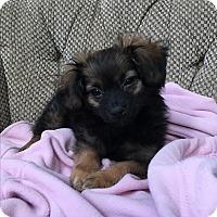 Adopt A Pet :: Annabelle - Woodstock, GA